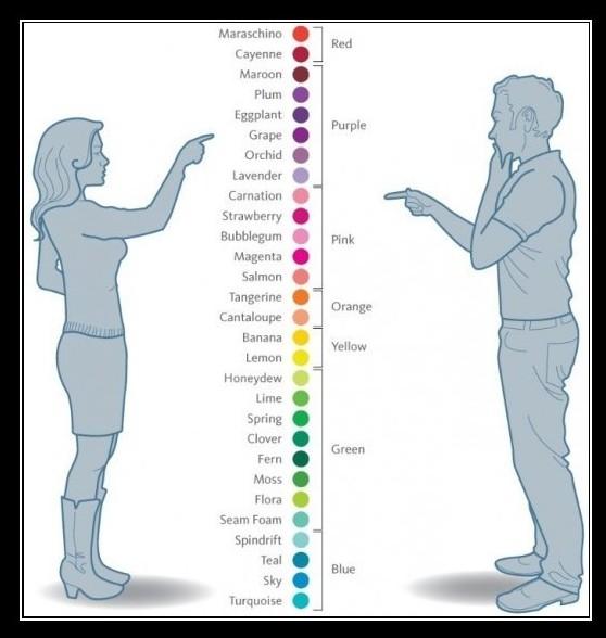 Een man en vrouw wijzen naar een groot aantal kleuren die tussen hen instaat. De vrouw ziet meer verschillende tinten, de man ziet vooral de kleurgroepen
