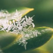 Op een grasspriet is een ijsvlok te zien, zover ingezoomd dat het ijskristal zichtbaar is